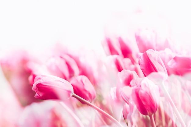 Champ de tulipes aux pays-bas Photo Premium