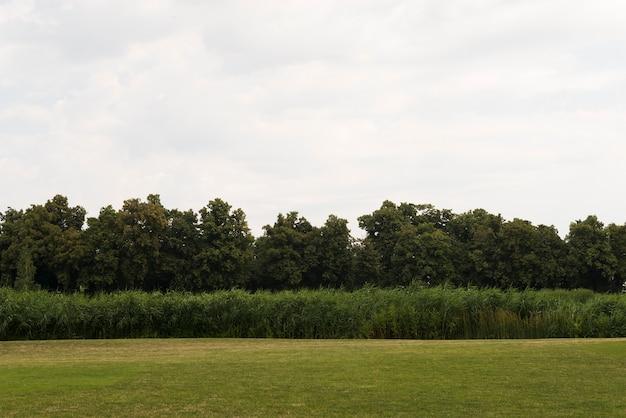 Champ Vert Avec Jeune Forêt D'arbres Photo gratuit