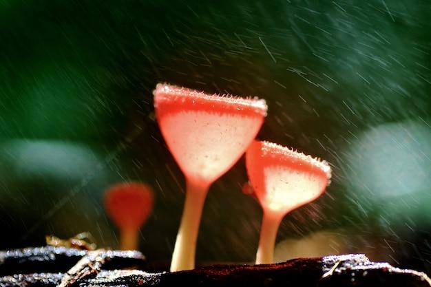 Champagne aux champignons orange Photo Premium