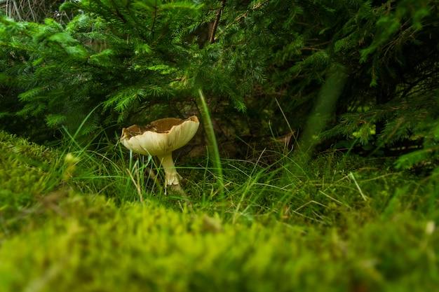 Champignon D'automne Dans La Forêt Sur L'herbe Photo gratuit