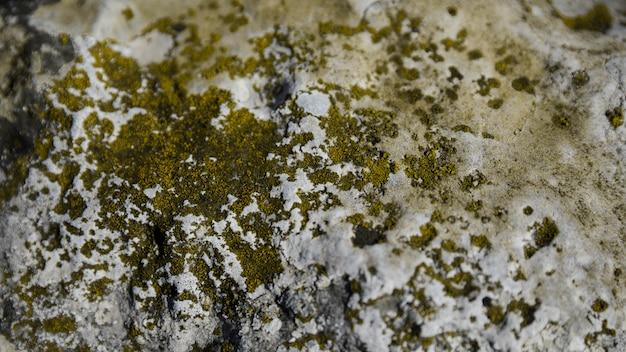 Champignon et mousse verte sur rocher Photo gratuit