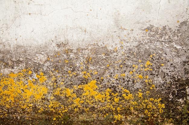 Champignon à La Surface. Moisissure Toxique Et Bactérie Fongique Sur Un Mur Blanc. Photo Premium
