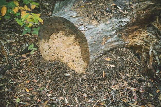 Champignons De Champignon Qui Poussent Dans La Forêt. Mise Au Point Sélective. Photo Premium