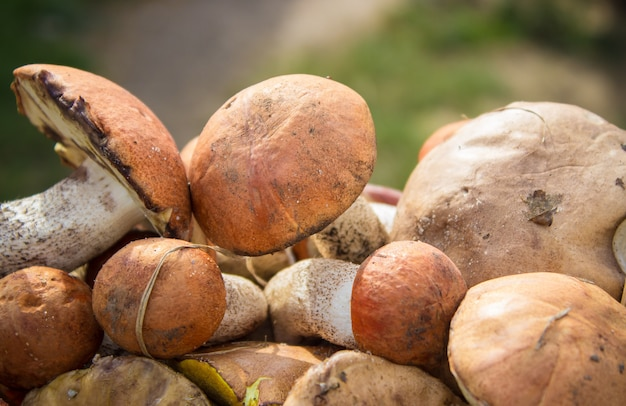 Champignons forestiers Photo Premium