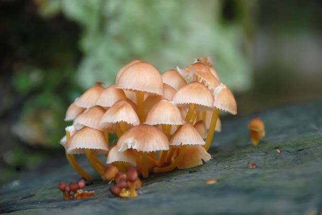 Champignons Vénéneux Dans Une Forêt Photo Premium