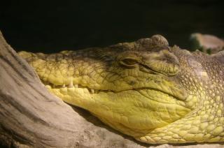 Chasseur de crocodiles, Photo gratuit