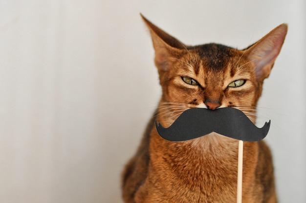 Chat Abyssin Avec Une Moustache En Papier Sur Un Fond Blanc Photo Premium