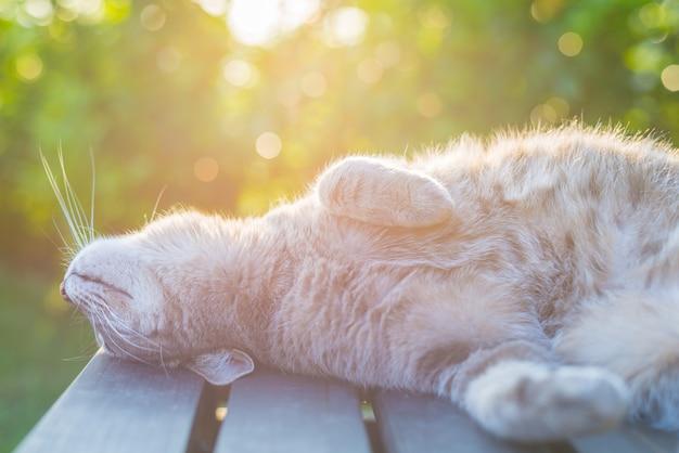 Chat allongé sur un banc en contre-jour au coucher du soleil Photo Premium