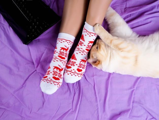 Chat allongé sur un canapé dans le salon décoré pour noël, jambes de femme en chaussettes de noël. Photo Premium