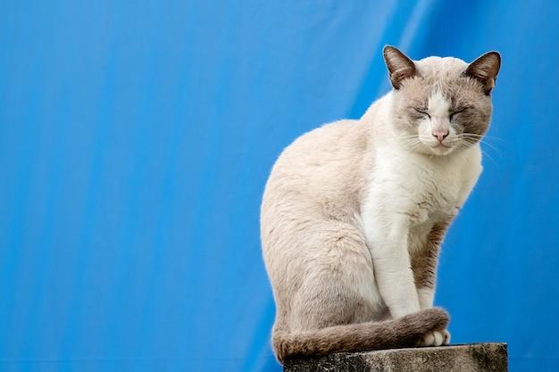 Le chat assis sur la clôture de la maison sur fond de toile bleue Photo Premium