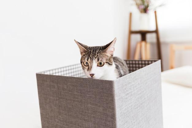 Chat assis dans la boîte et reniflant Photo gratuit