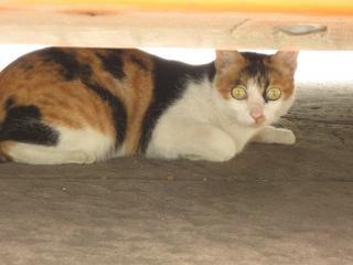 Chat aux yeux jaunes Photo gratuit