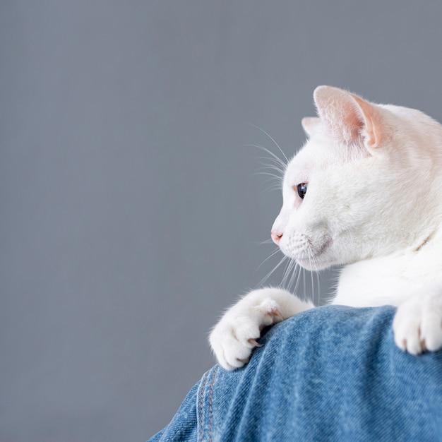Chat Blanc Assis Sur L'épaule De La Femme Photo gratuit