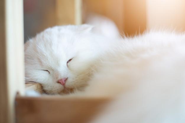 Chat blanc dort avec la lumière du soleil Photo Premium