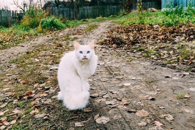 Chat blanc moelleux Photo Premium