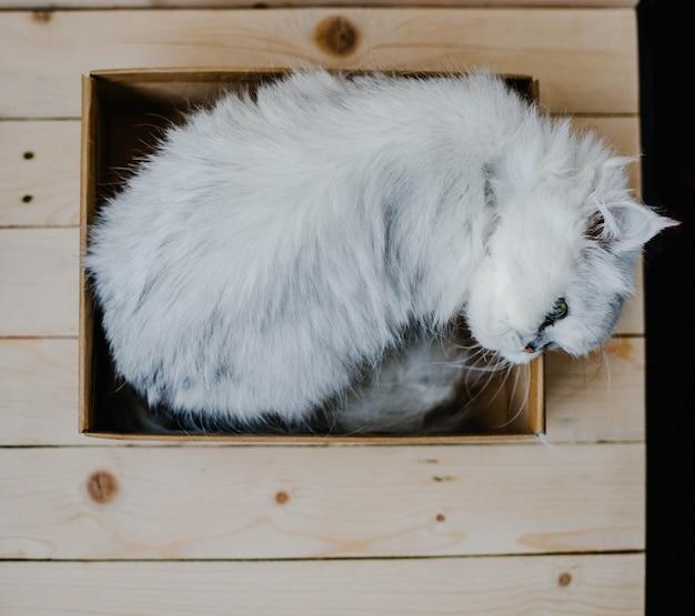 Chat blanc repose dans une boîte Photo Premium