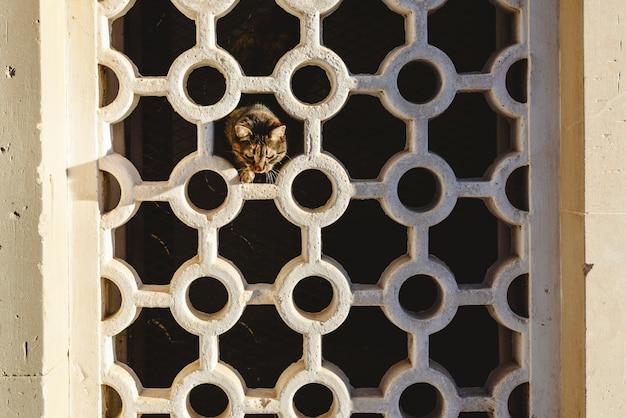 Chat brun en regardant depuis les trous d'un mur avec des formes géométriques. Photo Premium