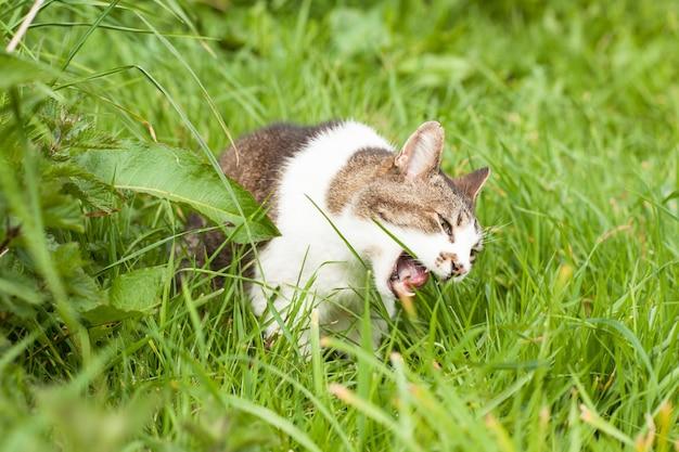 Chat en colère dans l'herbe verte Photo Premium