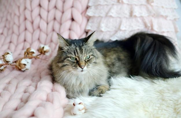 Chat couché sur lit géant plaid couverture fourrure chambre à coucher hiver vibes cosines relax Photo Premium