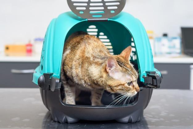Chat dans un chenil à la clinique vétérinaire Photo Premium