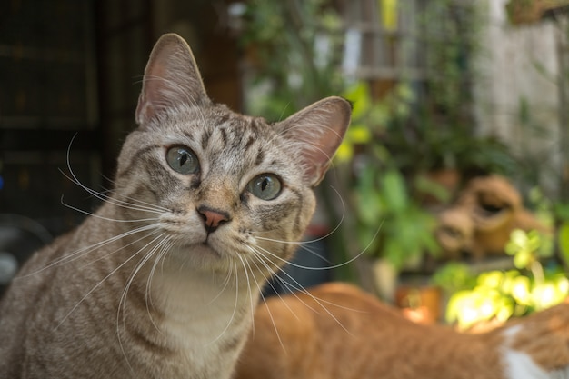 Le chat dans le jardin lève les yeux. Photo Premium