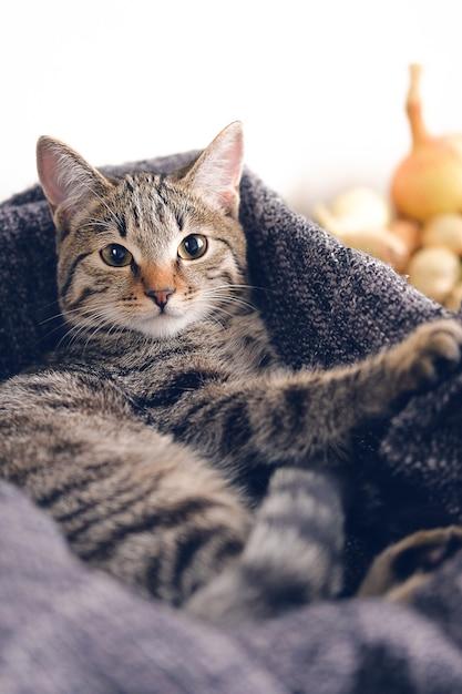 Chat domestique couché dans un panier avec une couverture tricotée. Photo Premium