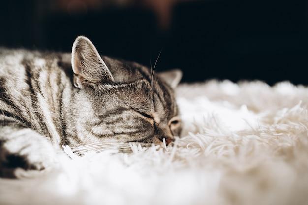 Chat Domestique Endormi Sur Le Canapé Photo gratuit
