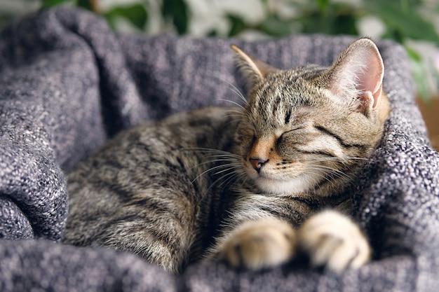 Le Chat Domestique Se Trouve Et Dort Dans Un Panier Avec Une Couverture Tricotée. Photo Premium