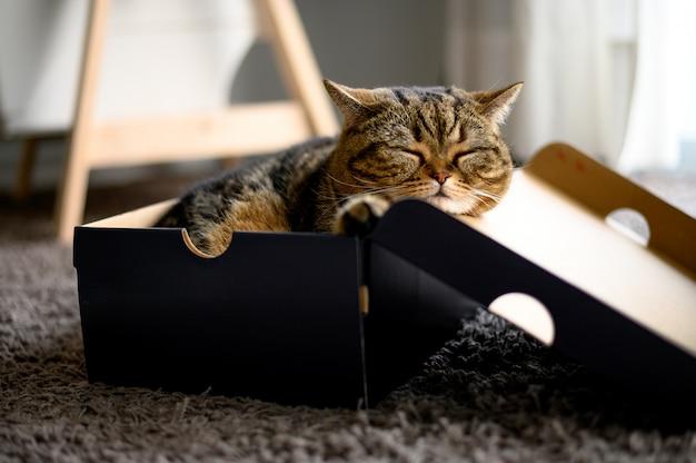 Chat dormant dans une boîte en carton Photo Premium