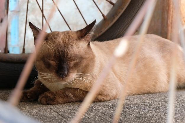 Chat dormant avec gros plan Photo Premium