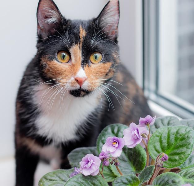 Chat Et Fleur à La Maison Dans Un Pot. Animaux Et Fleurs De Maison. Harm De Ho Me Fleurs Pour Chats. Chat Tricolore Photo Premium