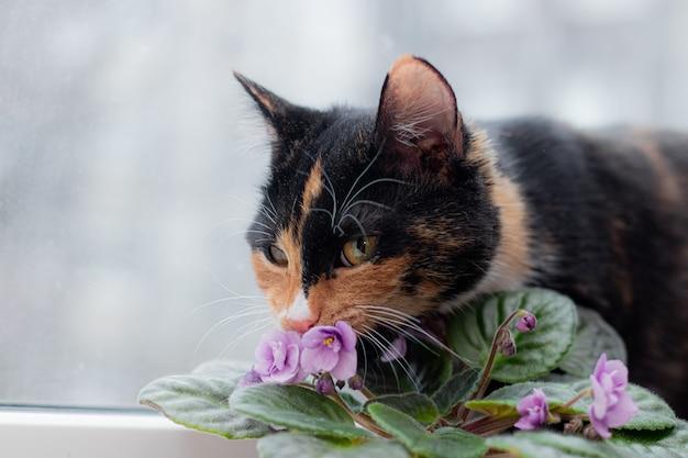 Chat Et Fleur à La Maison Dans Un Pot Photo Premium