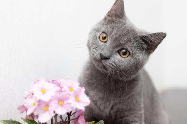 Chat Et Fleur à La Maison Dans Un Pot. Photo Premium