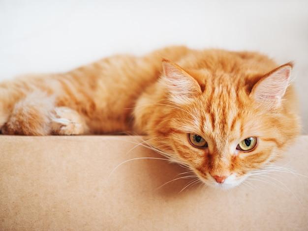 Chat gingembre mignon se trouvant sur la boîte en carton. peluche animal regardant curieusement. Photo Premium