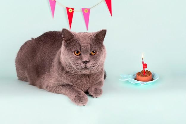 Chat Gris Britannique Souffle La Bougie Sur Le Gâteau Sur Fond Clair. Fête De Chat D'anniversaire Photo Premium