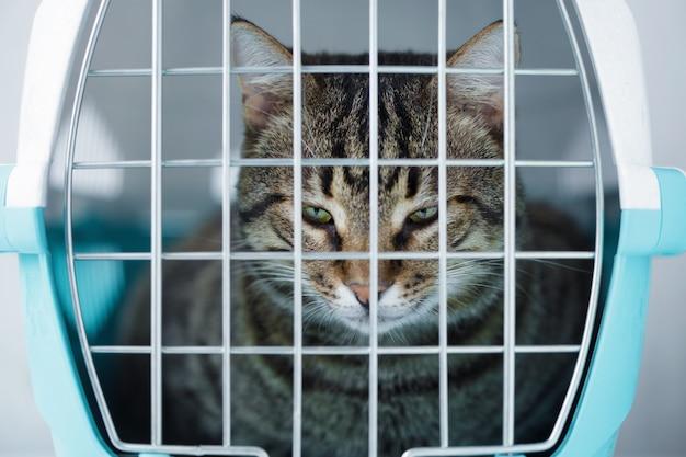 Chat gris dans une cage pour le transport Photo Premium
