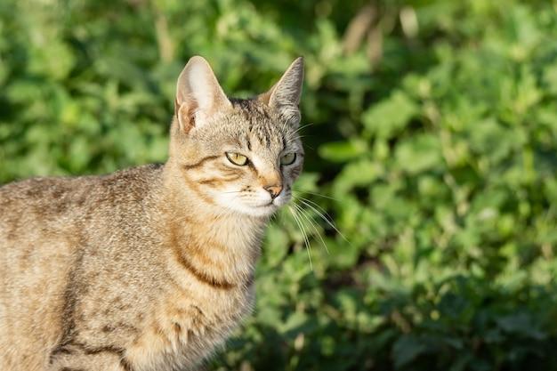 Chat gris sur l'herbe Photo Premium