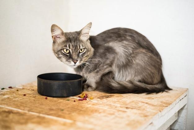 Chat gris mangeant des aliments Photo Premium
