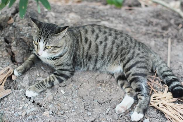 Chat gris rayé profiter et se détendre sur le sol du sol avec la lumière naturelle du soleil Photo Premium