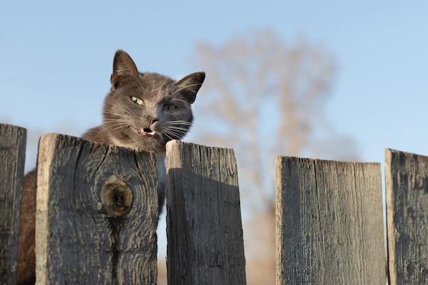 Le Chat Jette Un œil Derrière Une Clôture En Bois Et Sourit. Photo Premium