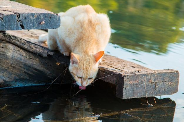 Chat jouant au bord de l'eau Photo Premium