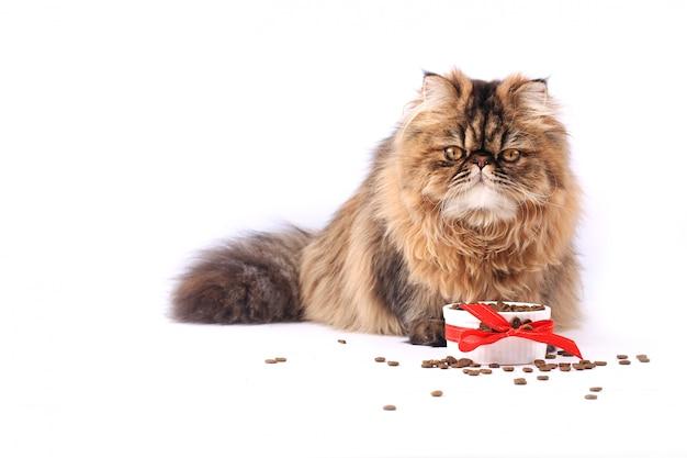 Chat mangeant des aliments secs isolé sur fond blanc. chaton persan Photo Premium