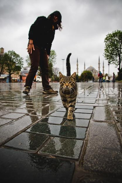 Chat marchant dans une rue. Photo Premium