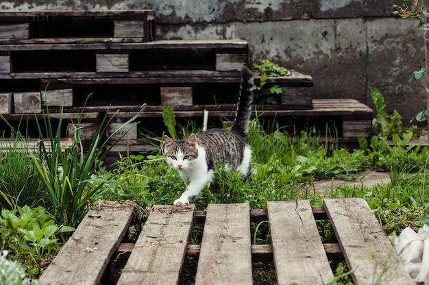 Le chat marche le long du chemin dans le jardin Photo Premium