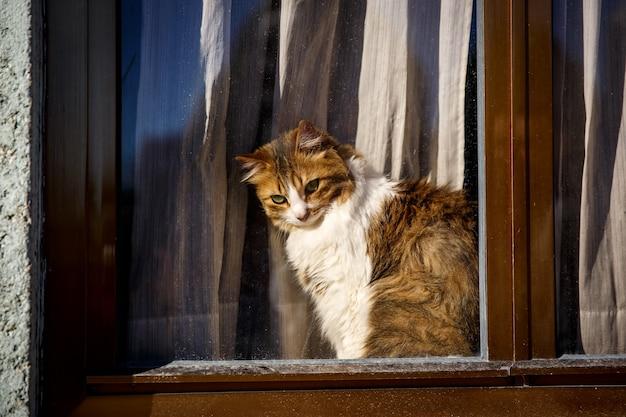 Chat Mignon Assis Sur La Fenêtre Derrière La Vitre Et Regarder L'extérieur, Vue Extérieure. Photo Premium