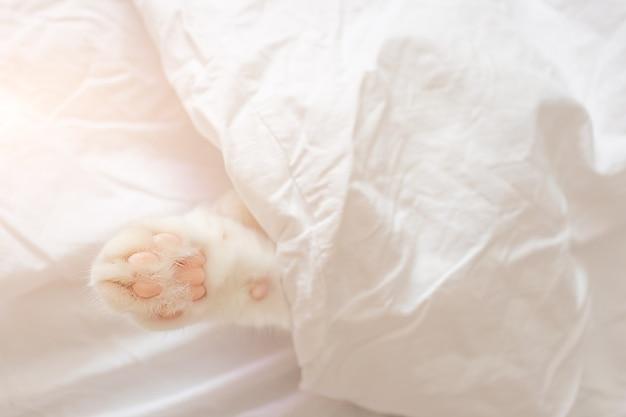 Chat Mignon Blanc Dort Dans Un Drap. Photo Premium