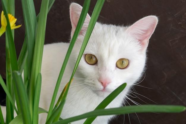 Chat mignon blanc en fleurs. sur un fond marron. Photo Premium