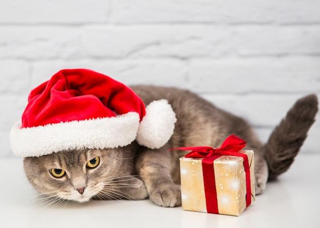 Chat mignon avec bonnet de noel et cadeau Photo gratuit