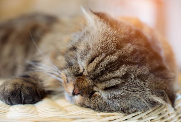 Chat mignon dormir sur le bois. focus sélective. Photo Premium