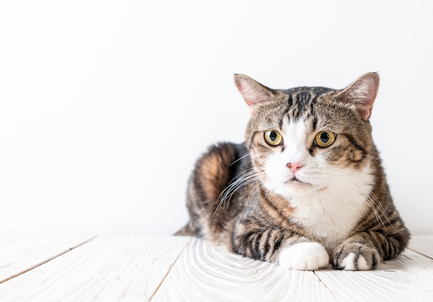 Chat mignon et gris Photo Premium